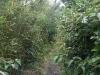 金比羅神社への道