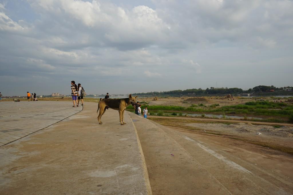 野良犬も川を眺めます